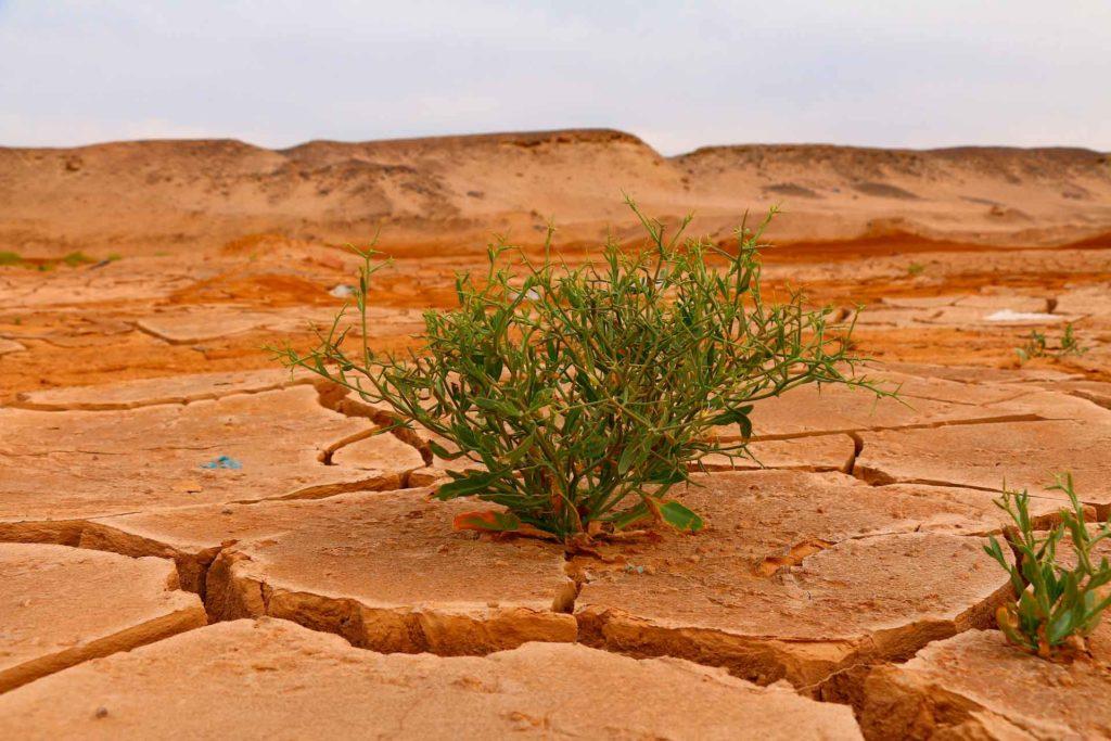 desert-4376898_1920